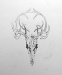 Deer by Paul Evans